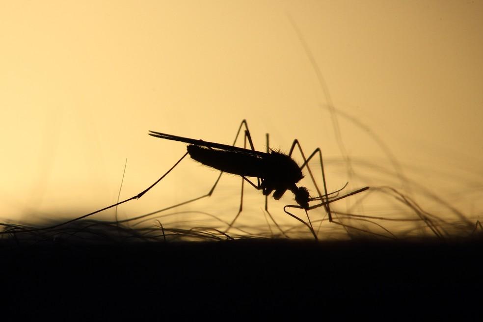 pulverização aérea para combater dengue é validada pelo STF